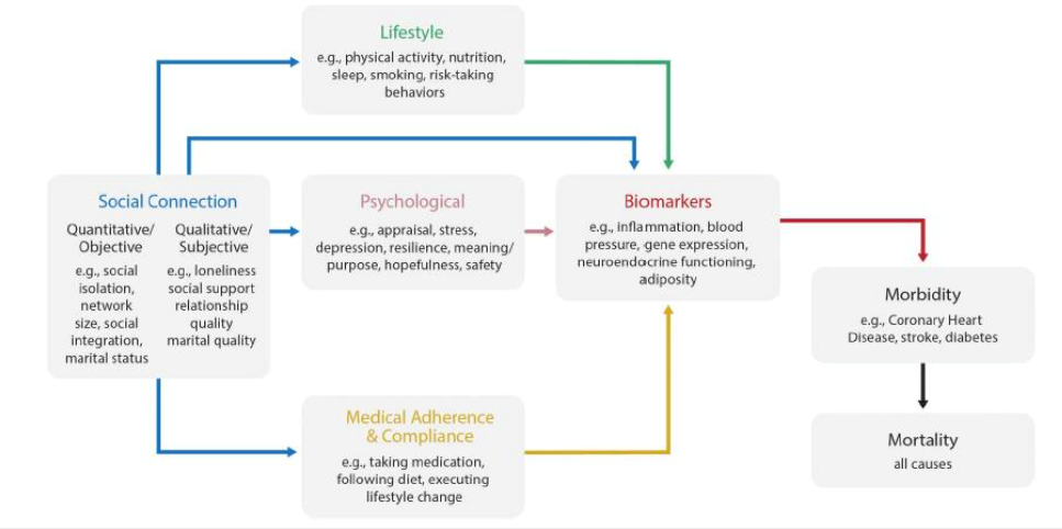 Diagram showing how loneliness and isolation can affect physical health